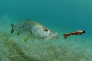 Big Bass Fish