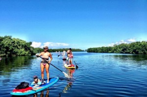 Mangrove Paddleboarding